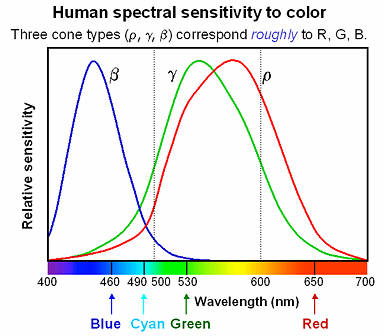 Spectral sensitivity of the human eye