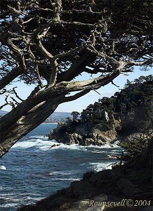 Point Lobos (c) Beth Rounsevell. Click for full-sized image from Beth's site.