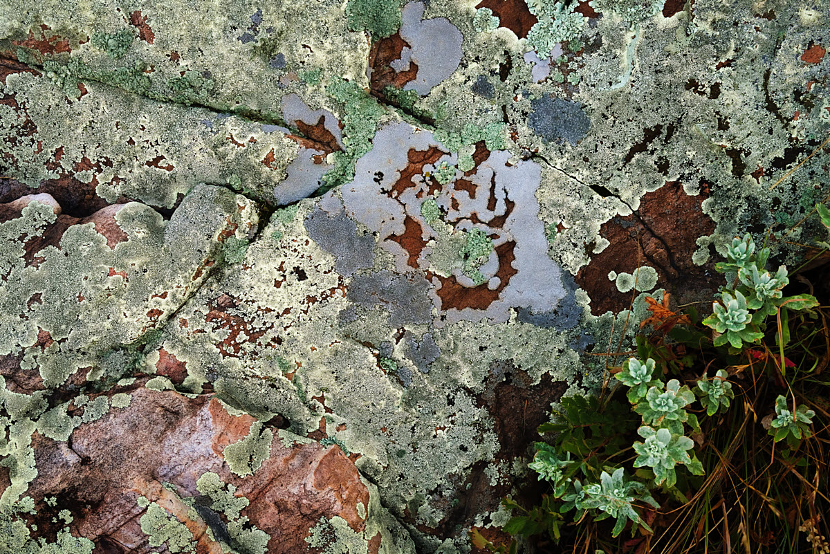 Abstract_lichen_DSC01643-saturated_1200W