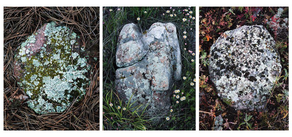 Lichen_rock_tryptich-1_tight-1600W