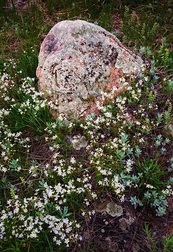 Rock_flowers_DSC00835-mod-1024H