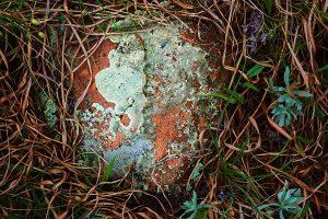 Round_rock_DSC01091-snappy-print-1200W