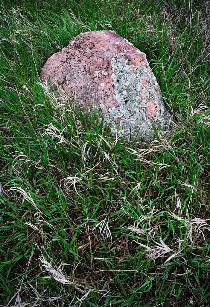 White_grasses_DSC00812-1024H