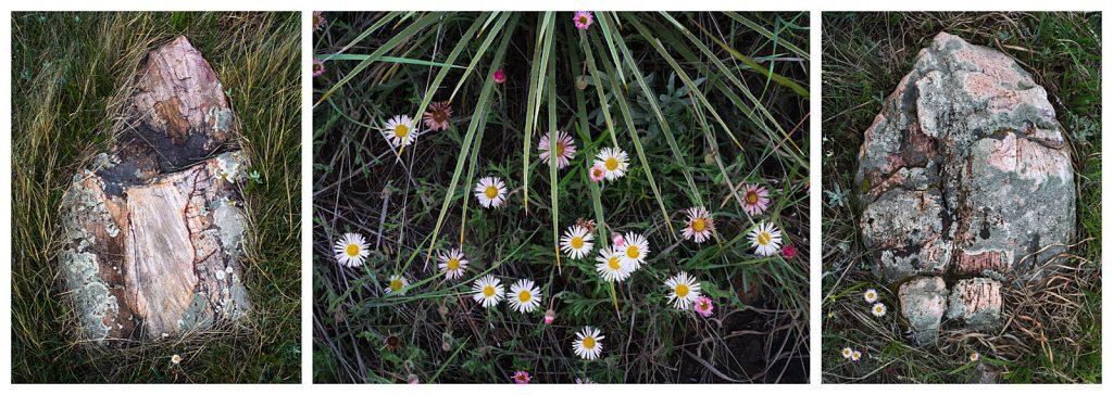 daisies_spiky_tryptich-1600W